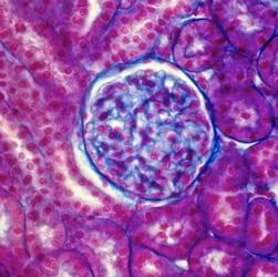 anatomia-patologia-thumb-0031