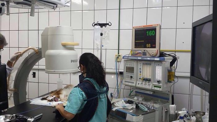 anestesia-full-001