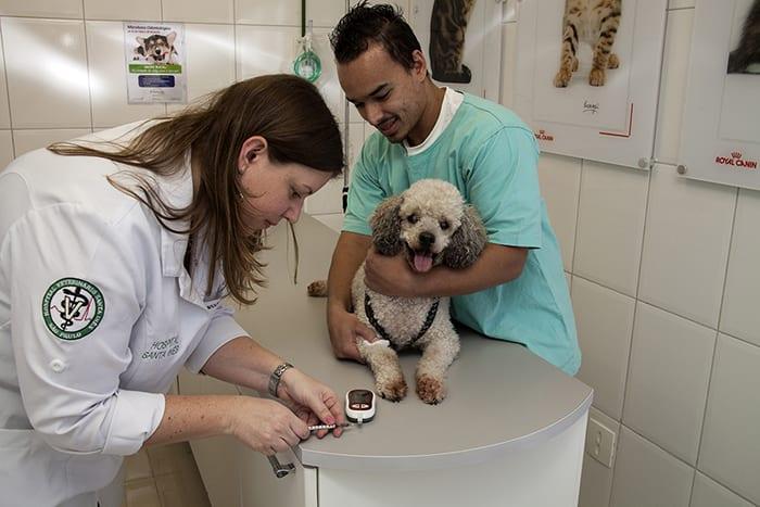 A importância de ser um auxiliar-veterinário