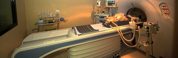 santa inês hospital veterinário estrutura