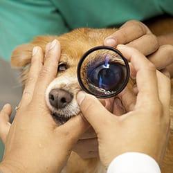 oftalmologia-thumb-001