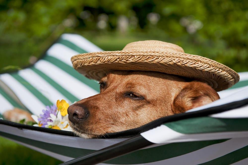 Verão: problemas mais comuns e cuidados especiais