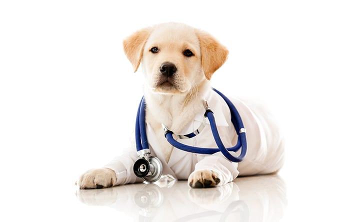 EUA treinam cães para farejar sinais de câncer nos ovários