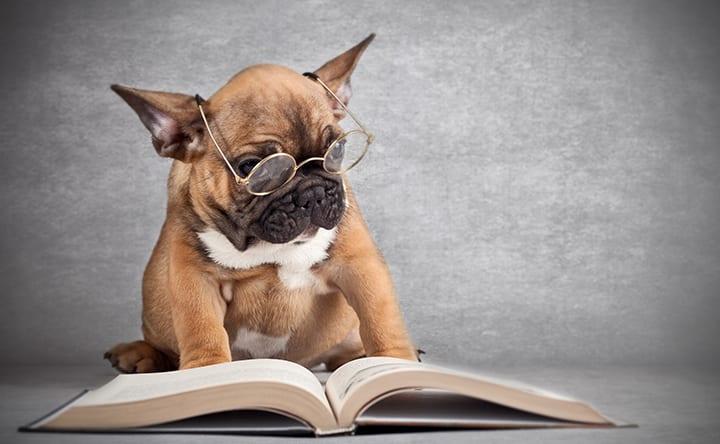 Pesquisadores descobrem que a memória de curto prazo dos cães dura apenas 2 minutos