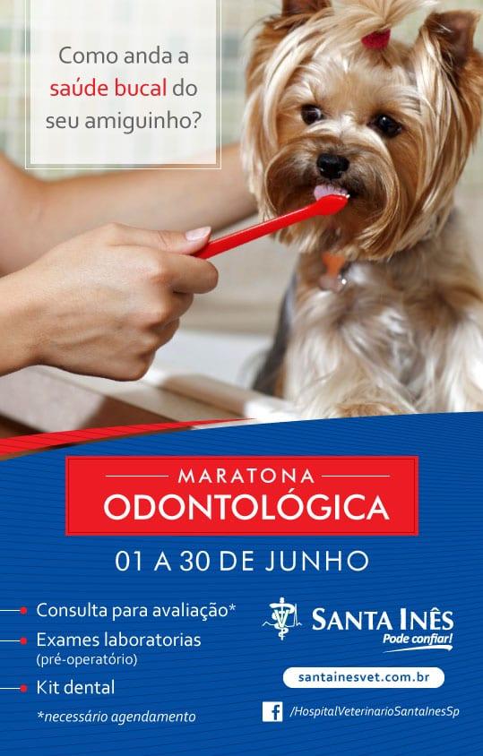 email_maratona_odonto_sta_ines