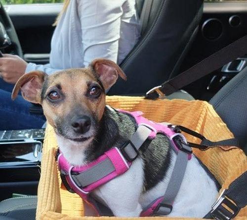 Como levar pets no carro com segurança. Confira dicas.