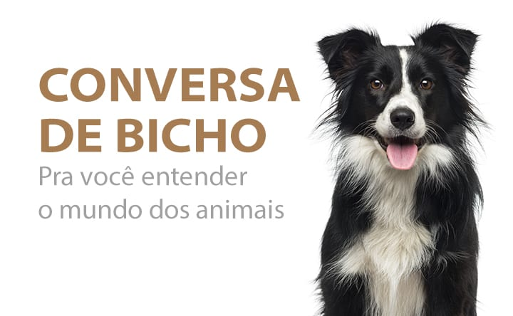 Blog Conversa de Bicho – Estadão: Especialista do Santa Inês fala sobre os perigos do chocolate para pets