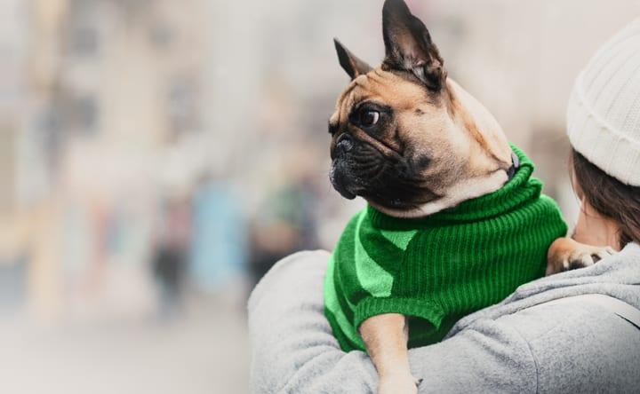 Pet shop Bem Estar Animal – Campanha do Agasalho Animal