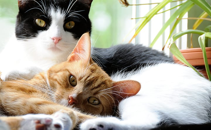 A história e o aumento da população felina