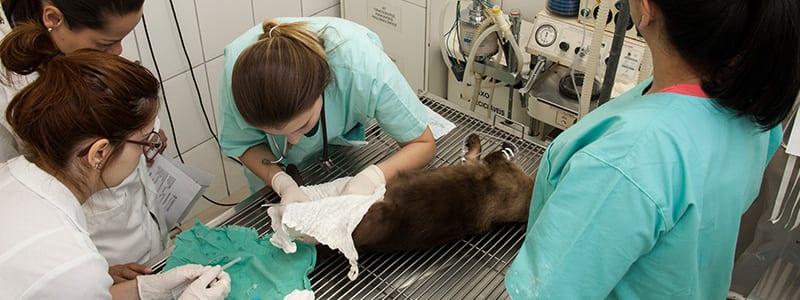 Cirurgias Especializadas