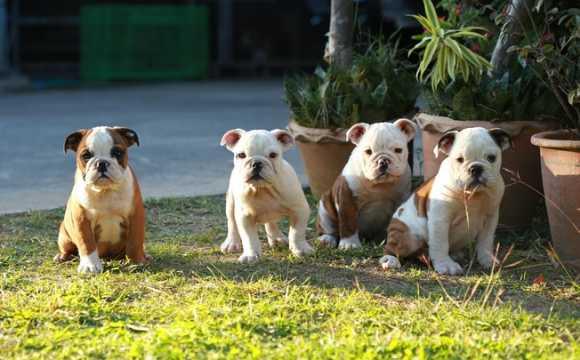 Castração só traz benefícios para seu animal de estimação
