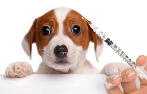 Vacinas evitam doenças infecciosas e salvam a vida de nossos pets