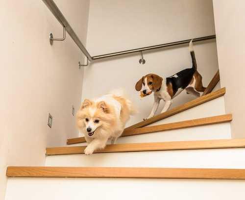Canal do Pet – IG: Principais erros que causam acidentes com animais domésticos